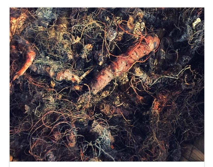 The Bitter Herb Market – The Bitter Herb Academy